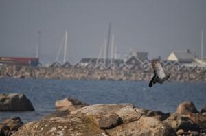 Natur med fågel